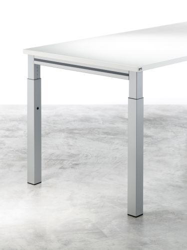 Hund-Schreibtisch-Callisto_Quadratfuß